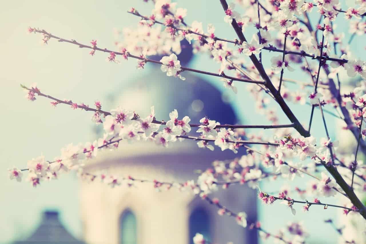 magnolia mississippi