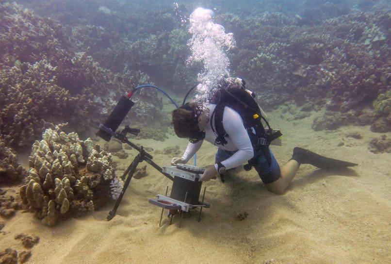 UC San Diego Ocean Study