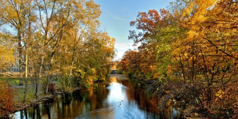 red cedar river msu