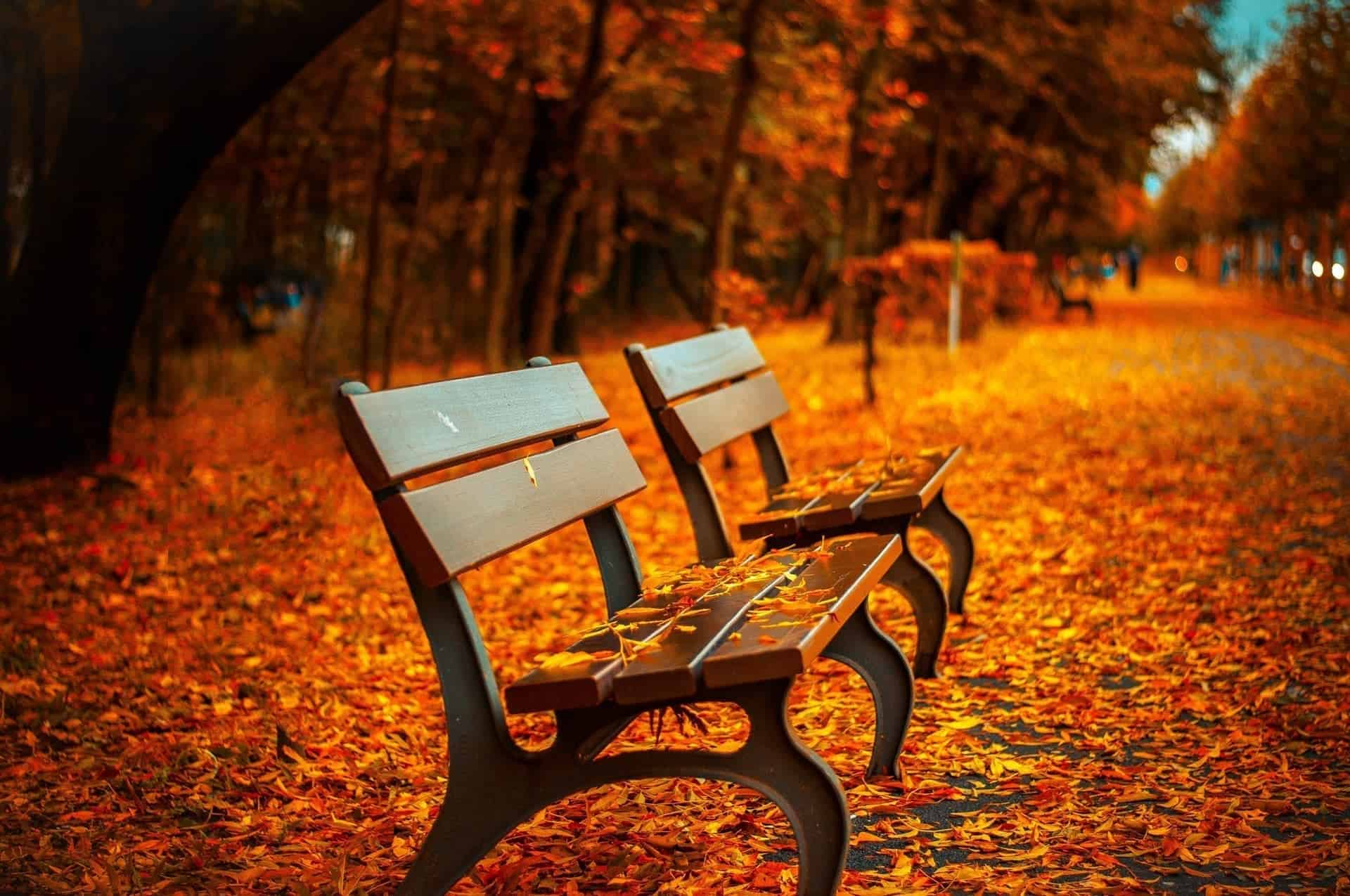 bench fall campus