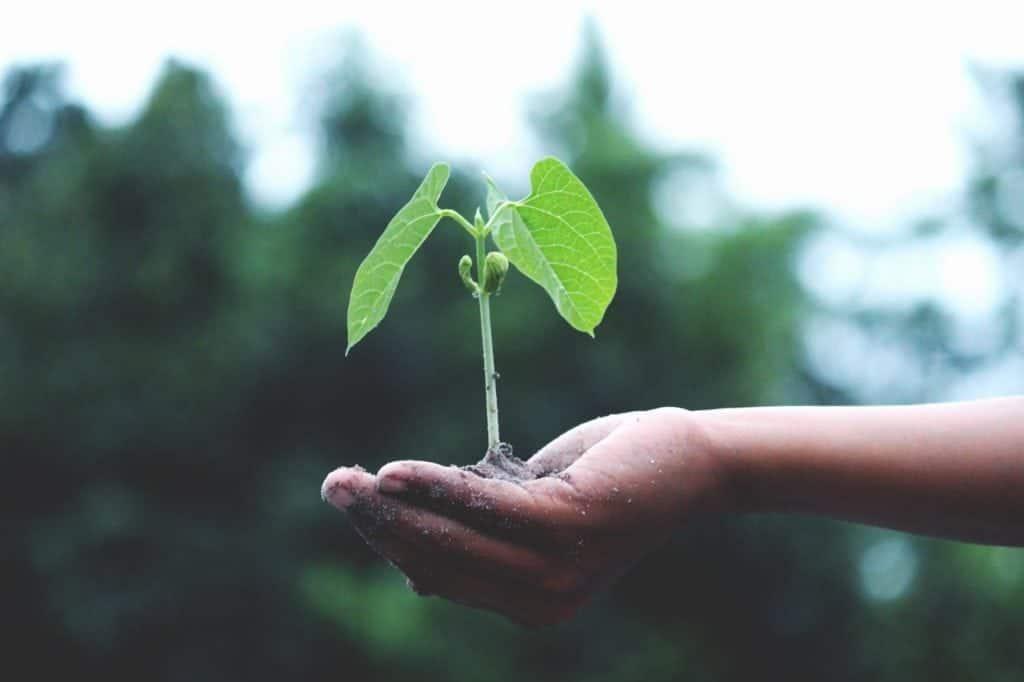 green schools tree seedling