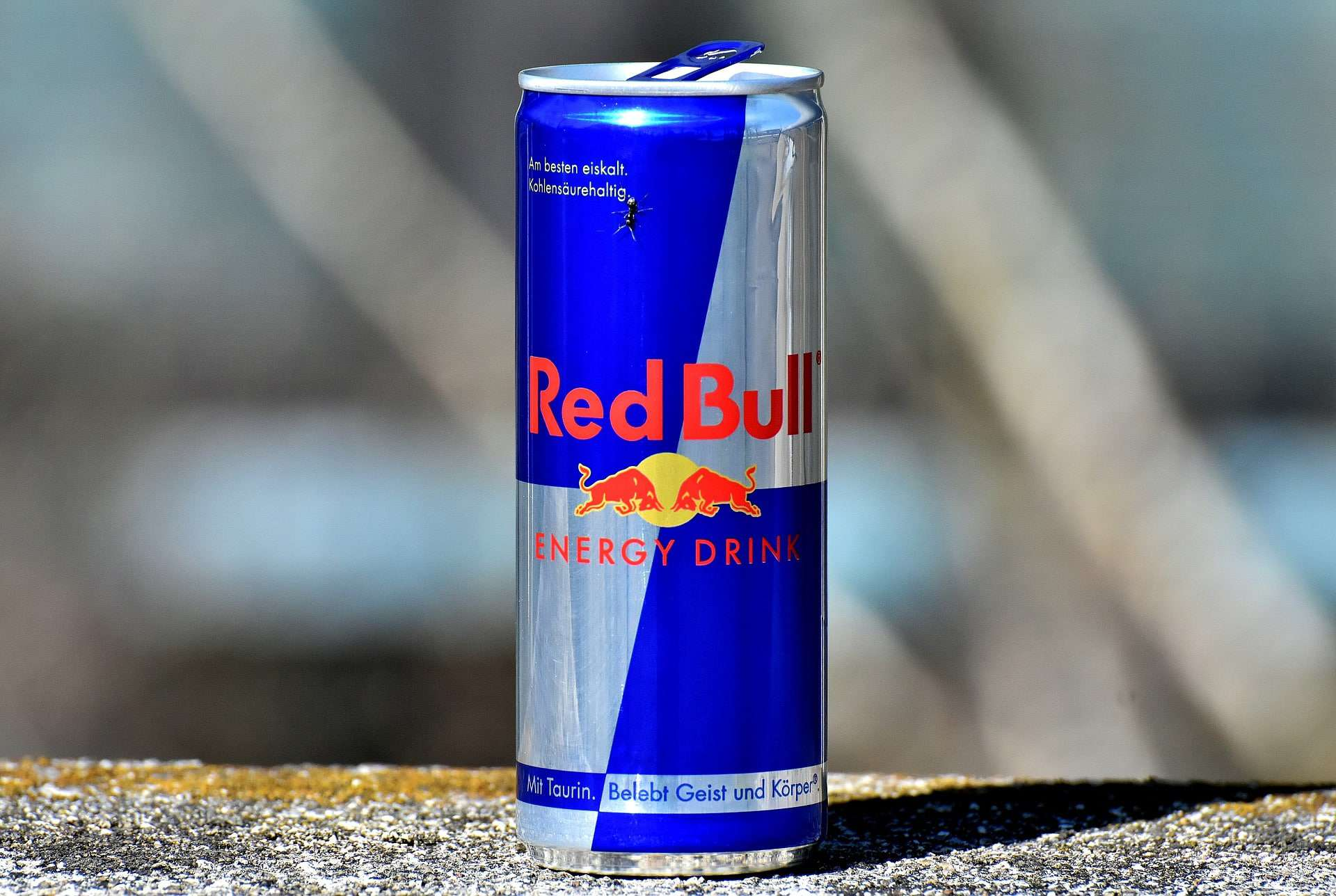 red bull energy college student