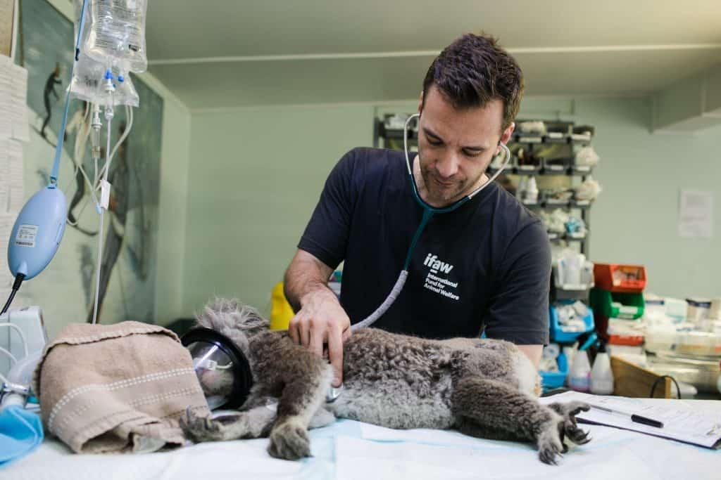 pexels international fund for animal welfare 5487067